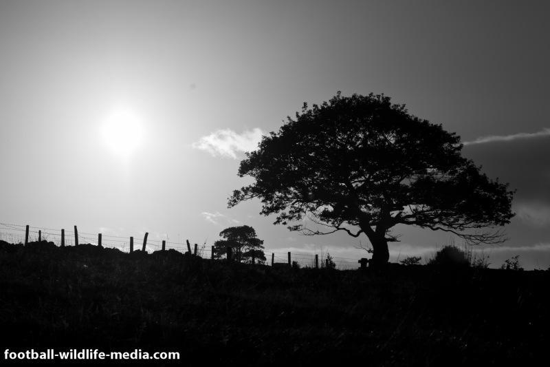 Tree in the sun