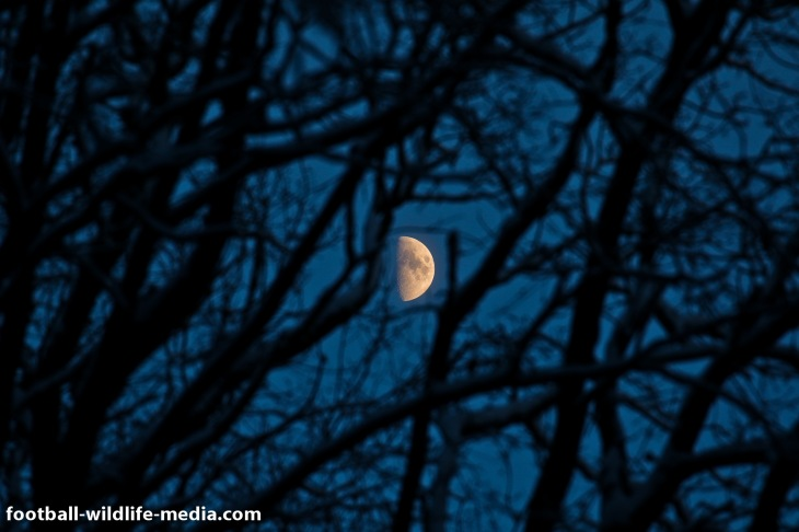 Moon behind the trees