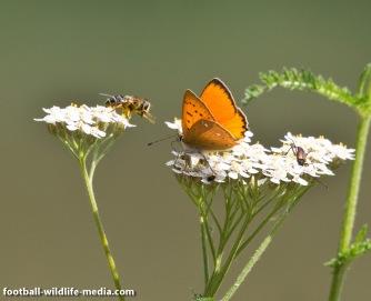 Bee vs. butterfly