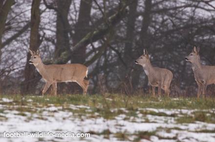 Oh deer, oh deer!